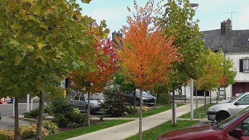 Place de la mairie en automne (3) R